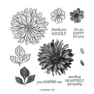 A photo of the images in the Delicate Dahlia Stamp set